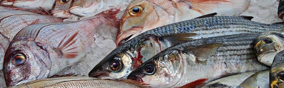 Сертификат на рыбу и рыбную продукцию