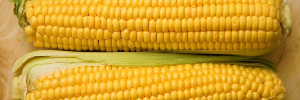 Сертификат на кукурузу