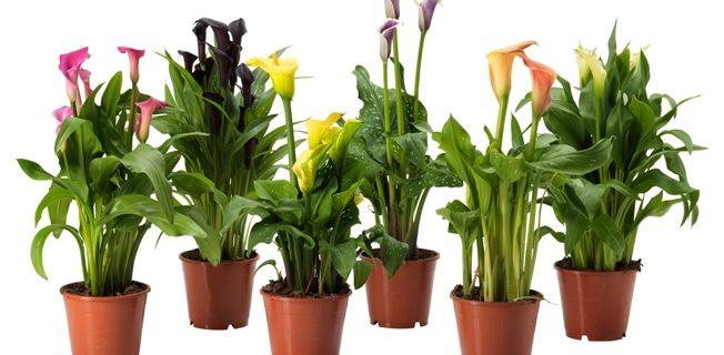 Отказное информационное письмо на живые цветы и растения